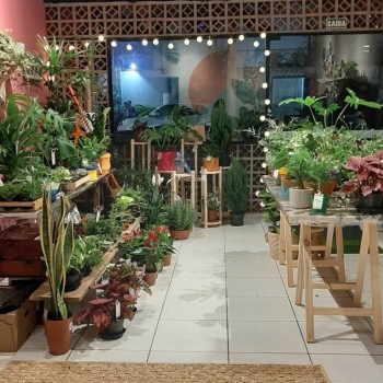 Vale Planta Verde & Vibes - im1620