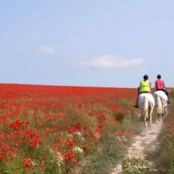 Cavalgada ao Pôr do Sol - im100