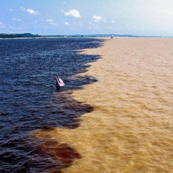 Encontro das Águas - im1359